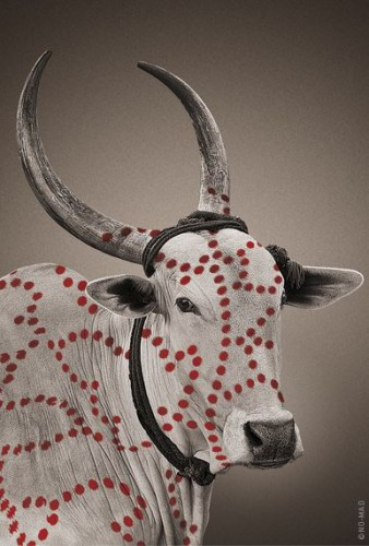 17_no_mad_india_brand_design_nandi_dots.jpg